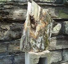 Concealed carry: A well shot log ready to be rotated or replaced.