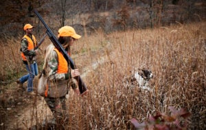 Two hunters, one male and one female, follow a white and black hunting dog through brown, waist-high reeds. The pair are wearing camoflauge clothing, orange hunting vests and each is carrying a pump-action shotgun.